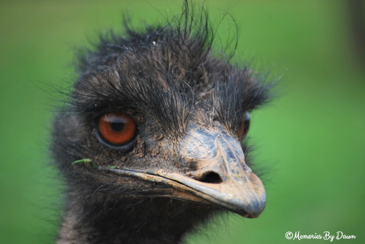 Emu2 watermarked