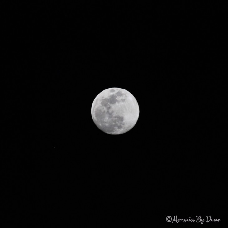 Full Moon watermarked